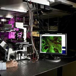 Non-Linear Microscopy
